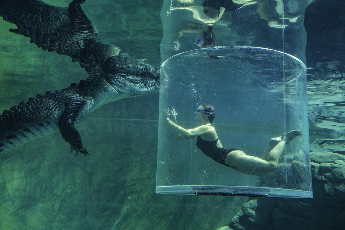 Crocosaurus Cove, Darwin