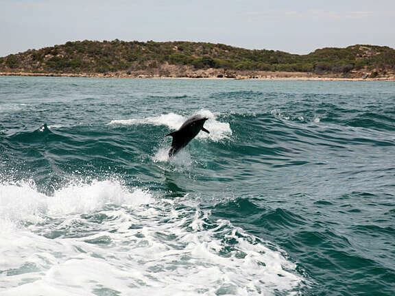 Perth dolphins rockingham