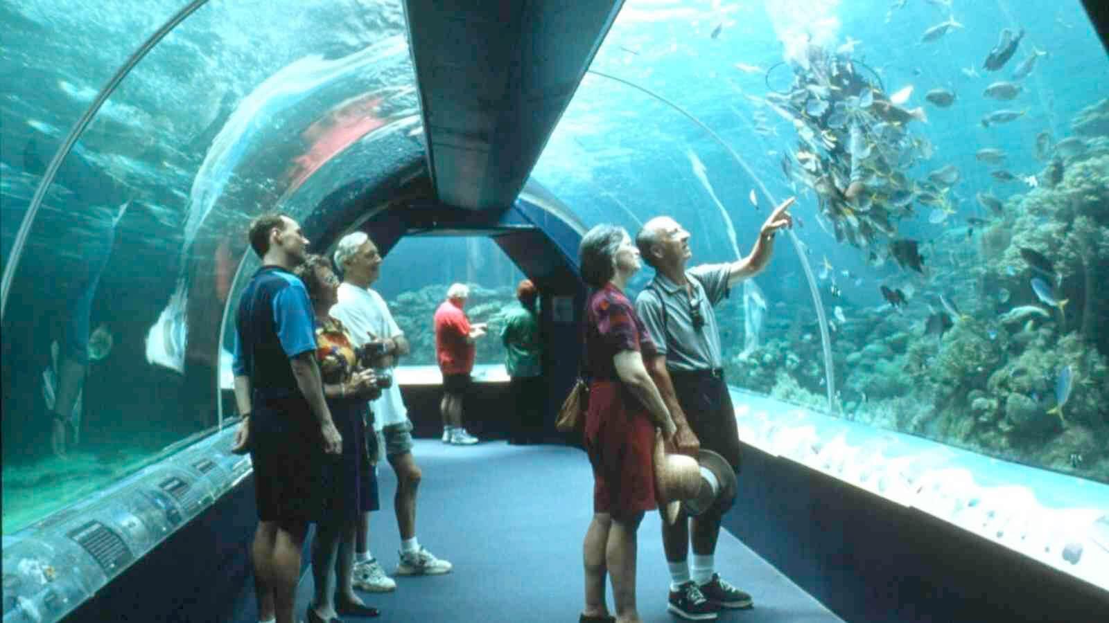 Townsville aquarium
