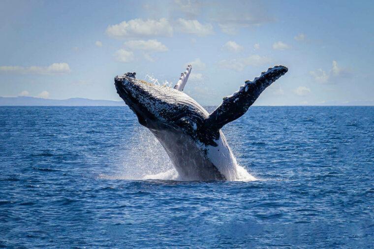 Se whale breach large