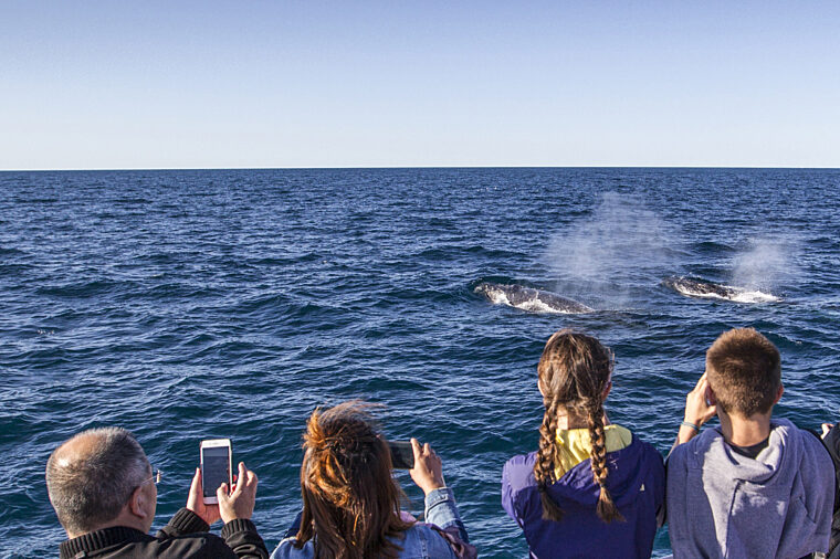 Family whale watching snapping pictures of humpback whales blowing wildlife non-ccc dnsw